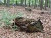 Baumstumpf als RuheBiotop